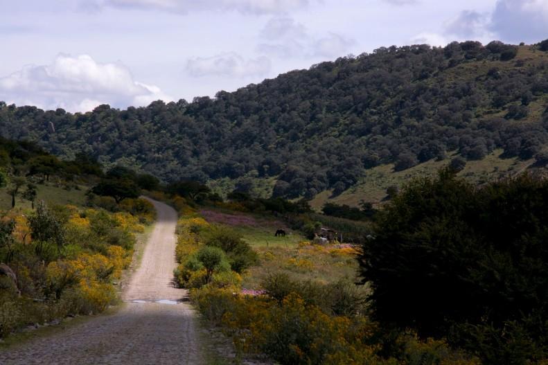 Je sortais de la vallée lorsque j'ai vu cette scène champêtre.